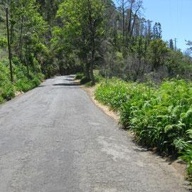 Wieder auf einer asphaltmäßig gurkigen Waldeinfahrt