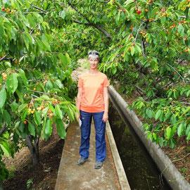 Birgit und Kirschenbäumen