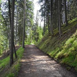 Das sind richtige Wald-Wanderwege,