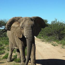 Eine Elefantenkuh