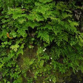 Wir finden interessante Farnpflanzen in allen Größen