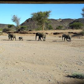 Da ist die ganze Dumbo-Familie!