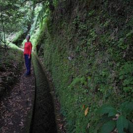 Steile Wände ander einen Seite, geht es durch das Grün zum Wildbach