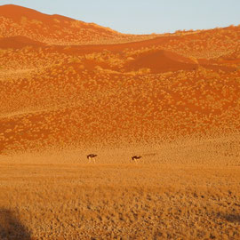 Die Dünen bekommen ihre Farbe durch die aufgehende Sonne und zwei Straußen stapfen majestätisch daher