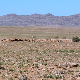 Zebras sind sehr scheu und schwer zu fotografieren - heute klappt es!