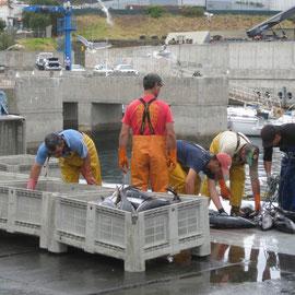 Im Hafen von Carnical sind gerade die Fischfänger wieder eingetroffen