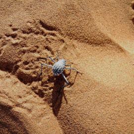 Käfer und anderes Getier hinterlässt sehr witzige und winzige Spuren im Sand