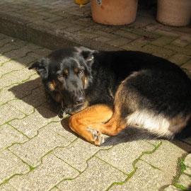 """Und """"Sam"""", Fritzes Hund, der immer so nachdenklich und ein wenig ärgerlich aus der Wäsche guckt."""