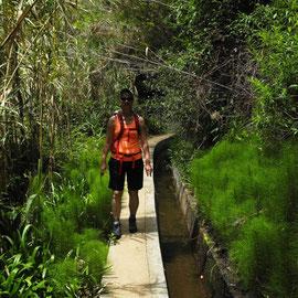 Und durchlaufen einen kleinen Eukalyptuswald