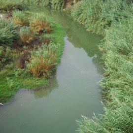 Rio Serpis a su paso por Gandía
