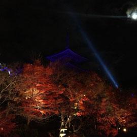 紅葉の背景にブルーライトアップされた清水寺の三重塔