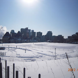McGill大学の校庭
