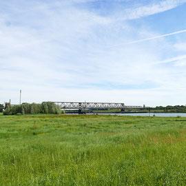 Artenreiches Grünland, Bereich D Rheinaue, Aufnahme-Datum: 07.06.2019
