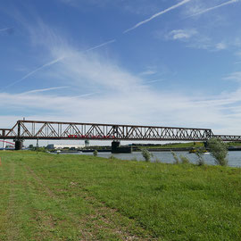 Ufer-Situation im Sommer, Bereich D Rheinaue, Aufnahme-Datum: 07.06.2019