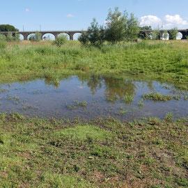 Senke mit Wasserpflanzen, Bereich D Rheinaue Aufnahme-Datum:16.06.2019