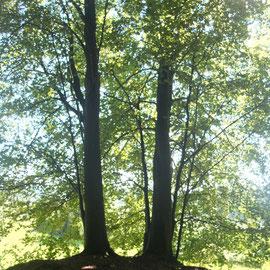 Was ist ein Friedwald