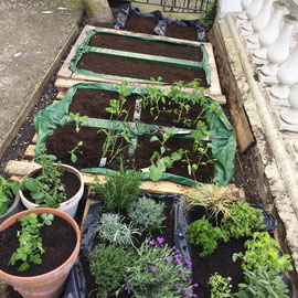 ...planted with Rosemary, Lavender, Oregano, Parsley, Wild Strawberries, Mint, Spinach, Beetroot & Cauliflower...