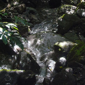 Stream, Chalet Lookout Path, Fox glacier