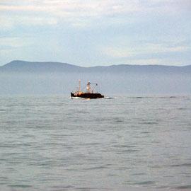 Foveaux Strait on way back from Stewart Island