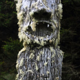 Figure and lichen, Stewart Island