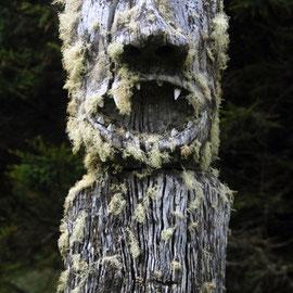 Figure and lichen, Stewart Island