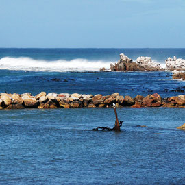 Stony Point at Betty's Bay