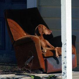 Dog in chair, Whataroa