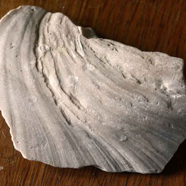 Inoceramid bivalve fragment (c.80MYA) from St Margarets Bay. Image size 63KB at 72ppi.