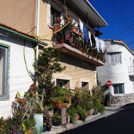Plant House, Skala, Larnaka