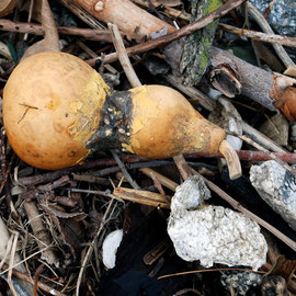Gourd and Flotsam along the Hudson