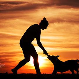 Old Englisgh Bulldoggen Mix Amy beim Spiel im Sonnenuntergang