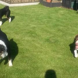 Cleo mit ihrer Schwester Bella und Bruder Marley