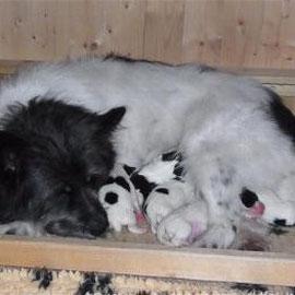 Gessy mit ihren Babys
