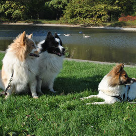 Einstein und Nash treffen Tochter und Halbschwester Nela im Großen Garten in Dresden.