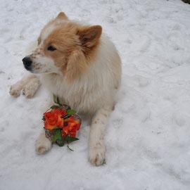 aber irgendwie schmecken die Blumen gar nicht
