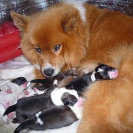 Die stolze Mama Lotti mit ihren Babys