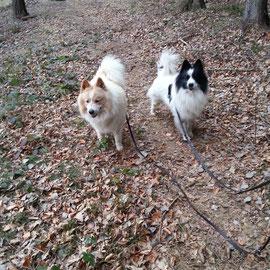 Spaziergang im Hundewald