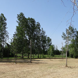 Bivouac dans un champ