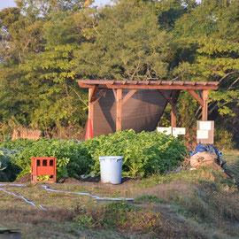 L4区画 こだわりの松本さん専業農家の免許皆伝ですね。満点の冬野菜