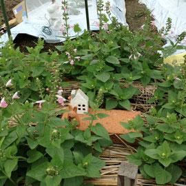 M1区画 子ウサギの焼き物を添えたピンクのサルビア パーゴラの隣にも咲いています。