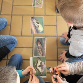 Die Kinder lernen die verschiedenen Stadien der Metamorphose kennen