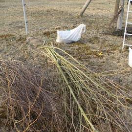 Busch für Nest Birke und Weide