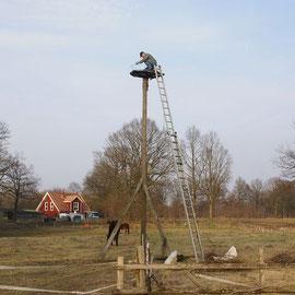 Befestigen des Neuen Nestes nach entfernen der alten Nest reste