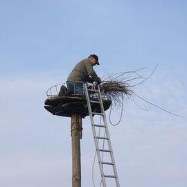 Flechten der Nest Konstruktion mit Weiden und Birken Busch
