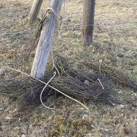 Reste des alten Nestes