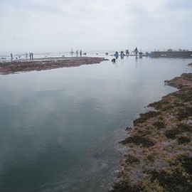 干潮のウニ増殖溝