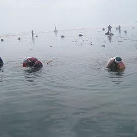 浜の女性たちが増殖溝でウニ漁