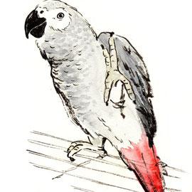 鳥 ヨウム ペット 筆タッチイラスト 水彩
