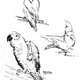 鳥 コザクラインコ ヨウム ペット 筆タッチイラスト スケッチ