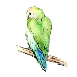 鳥 コザクラインコ ペット 筆タッチイラスト 水彩